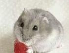 兔兔活体~小熙熙宠物店