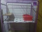 八成新双层猫笼子出售(150)