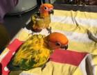 出售金太阳鹦鹉 亚历山大鹦鹉 小绯胸鹦鹉 和尚鹦鹉