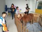 浙江温州矮脚马借租-借租羊驼-小香猪出租-广告电影写真拍摄