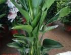 天津塘沽花卉租摆绿植销售绿植养护服务公司海明花卉全城配送送货