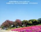 深圳农家乐松湖生态园松山湖拓展基地较有体验价值松山湖拓展