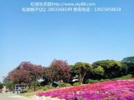 深圳周边农家乐松湖生态园东莞花海里的农家乐松湖生态园