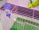 99新兔笼转让带兔草兔食食盒磨牙石奶嘴