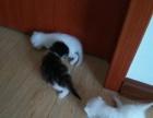 可爱三只小猫找主人啦