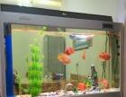 鹦鹉鱼银龙鱼价优处理