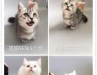 秦皇名猫汇,自家猫舍,一手货源