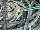 唐山市电缆回收(今日电缆回收报价)