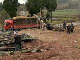 思茅批发茨竹粉碎机-双口竹木材粉碎机