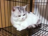 自家繁育的小猫咪