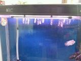 1.2米5星大鱼缸