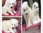 芜湖哈士奇怎么卖 哈士奇价格 芜湖宠物狗