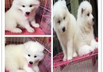 岳阳市区哪里有宠物店 岳阳领养宠物要多少钱