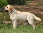 成都繁殖基地出售大中小型寵物犬,正規專業,品種齊全