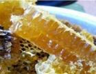 野生蜂蜜 纯蜂蜜