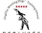 湖北襄阳荆楚赛犬训练学校