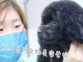 杭州爱可宠物美容培训学校7月25日招生啦。