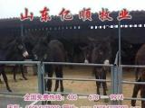 山东大型养驴场     山东乌头驴养殖场