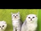 出售各种宠物猫咪