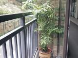 东莞横沥绿植出租A室内植物租摆A东莞汇安园艺