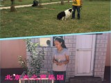 车公庄家庭宠物训练狗狗不良行为纠正护卫犬订单