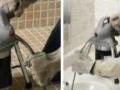 大连八一路通厨厕,通地漏返水,通面盆,换水管水龙头