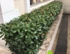 普陀办公楼室内绿化绿植花卉租摆植物租赁摆放养护