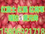 山东红富士苹果批发市场丰县
