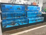郴州蘇仙區海鮮池 價格咨詢海鯊