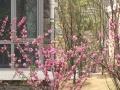 香河一城附近 香汐经典2居 靠谱出售 花园式小区
