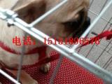 苏州哪里有狗场卖巴哥的 苏州哪里有犬舍出售八哥的