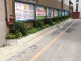 深圳绿植租赁花卉销售苗木批发绿化施工