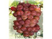 批发葡萄苗,品种纯的葡萄苗出售