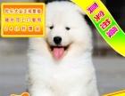 优惠中狗狗用品任意选纯种萨摩耶犬出售签合同