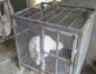 忍痛出售大型狗笼