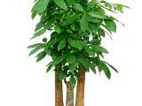 廣州番禺植物出租 廣州番禺植物銷售 廣州番禺植物租賃