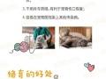 杭州宠物上门绝育