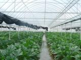 濮阳供应蔬菜大棚建设厂家几字钢大棚骨架建