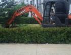 武汉小挖掘机出租栽树园林绿化挖沟埋管室内拆除改造等