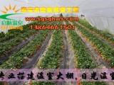 蔬菜大棚草莓异形果的预防措施