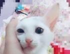 可爱的小白猫出手