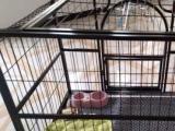 宠物猫咪家庭寄养春节假期常年有效