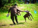 海口狗狗训练宠物 寄养训练狗狗大小便