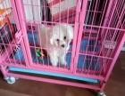 家庭式寄养宠物狗