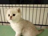 银川的宠物店 猫咪批发
