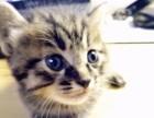 可爱猫猫找主人啦