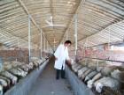 湖羊安徽争华养殖利润分析 ,湖羊养殖效益