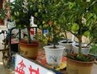 花盆里的苹果树,楼顶上的苹果园