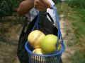 上海周边农家乐旅游 采摘垂钓 享田园风光 品农家土菜