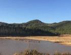 (优质)云南昆明市禄劝武定40亩水库出租